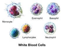Mammalian Blood